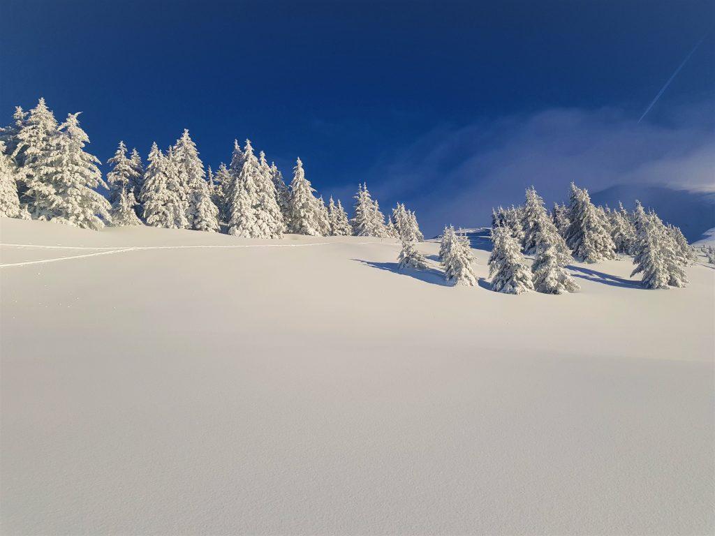 fresh powder ski run